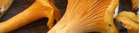 Of Mushroom Lore and Bonsai