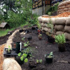 Boring Lawn to Edible Food Forest